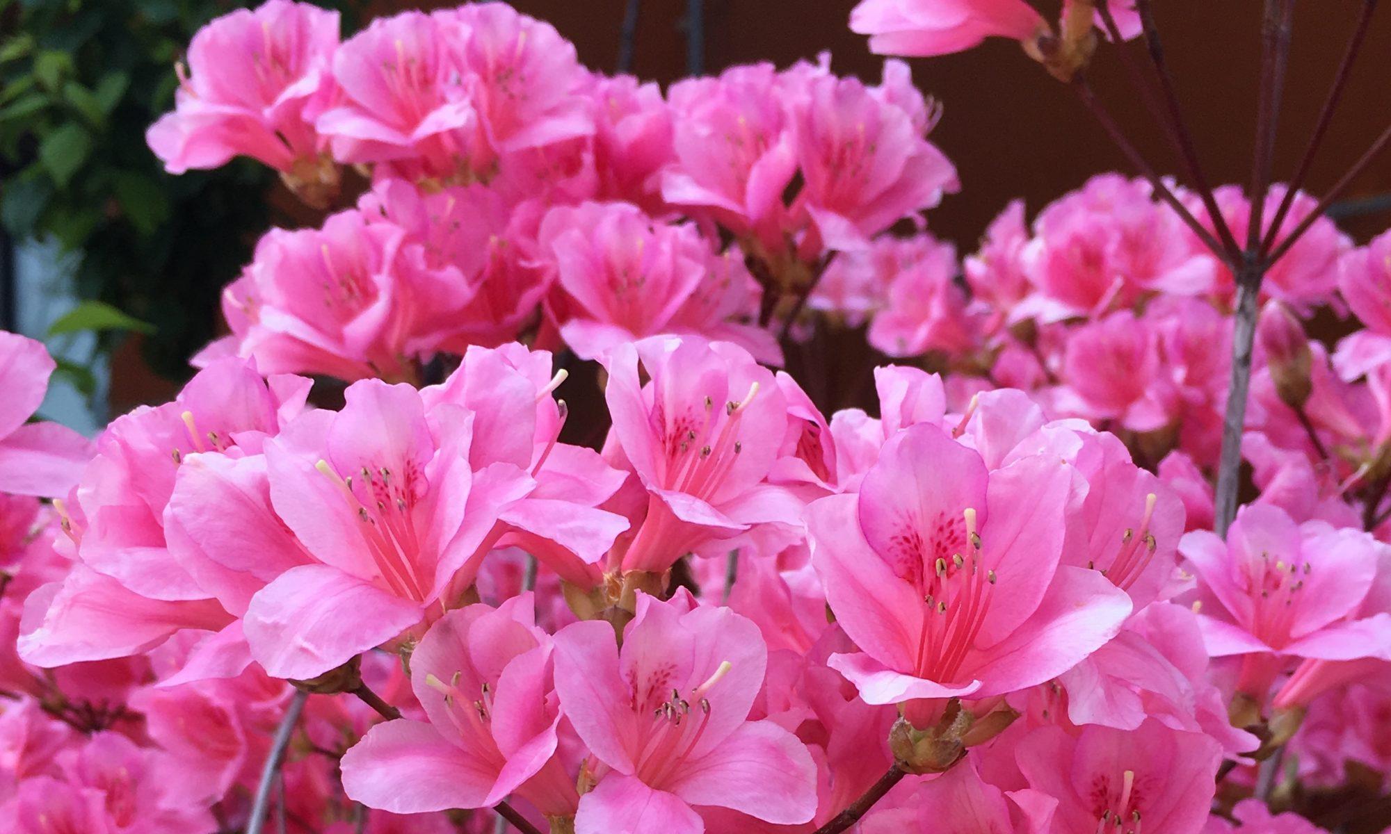 One Spring day, Jeju Island